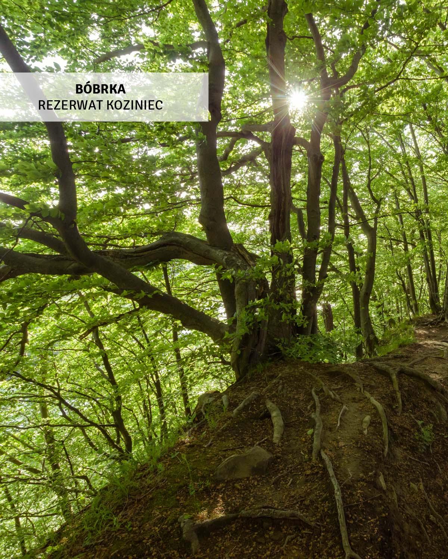 rezerwat-przyrody-koziniec-wycieczki-bieszczady