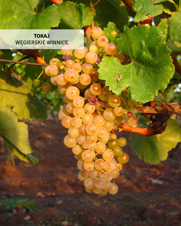 winnice-wegry-wycieczka-wakacyjne